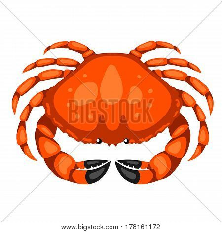 Red crab. Isolated illustration of seafood on white background.