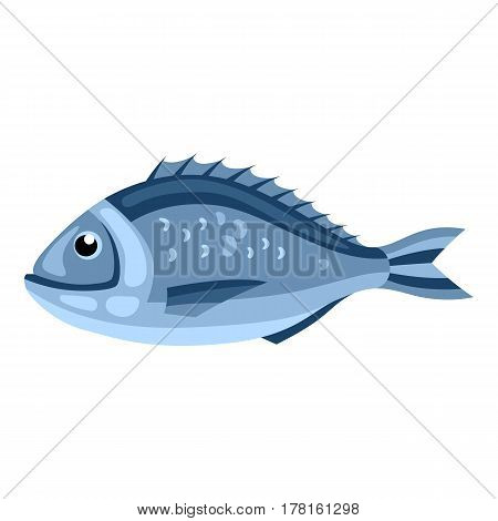 Dorada fish. Isolated illustration of seafood on white background.