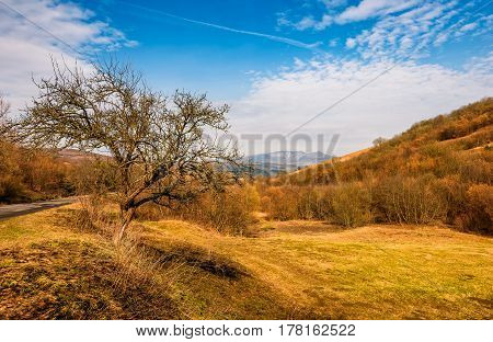Tree By The Road In Mountains In Springtime