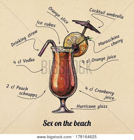 ink drawing and watercolor illustration of cocktail Sex on the Beach and its ingredients. On old paper background.