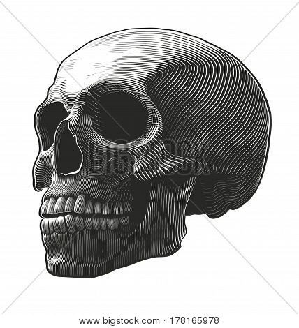 Vector illustration of human skull in woodcut style on transparent background