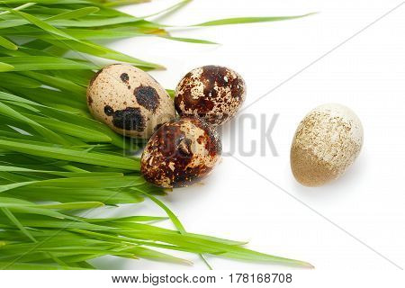 Quail eggs are and green grass isolated on a white background.
