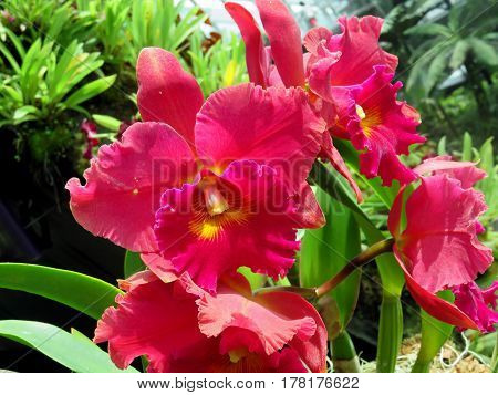 Beautiful Orchid Flower Blooming in Vivid Color