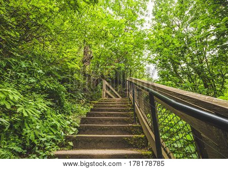 Staircase In Lush, Green Forest