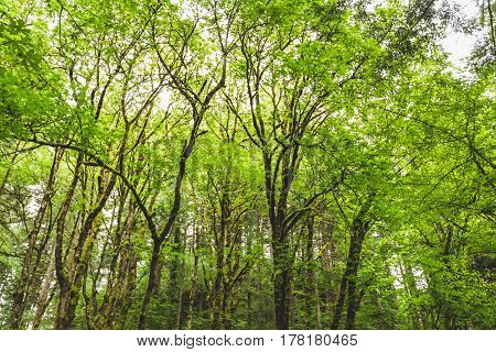 Green Trees In Lush Forest