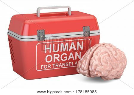 Portable fridge for transporting donor organs with human brain 3D rendering