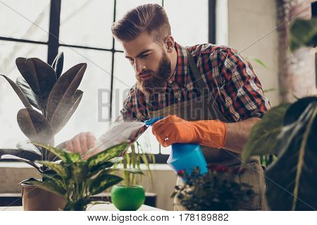 Portrait Of Confident Young Professional Gardener Spraying Plants' Leaves In His Greenhouse