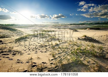 Footprints and green grass in the desert
