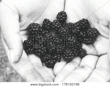 blackberries collected perso. nature and human :)