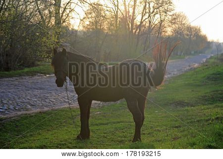 brown horse with chain in the evening
