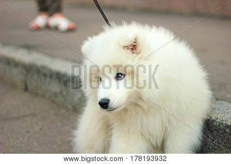 beauty white dog on street makes people sad