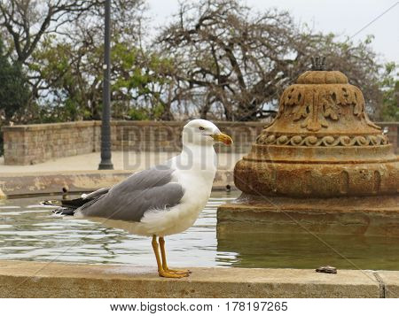 White and gray seagull next to the fountain