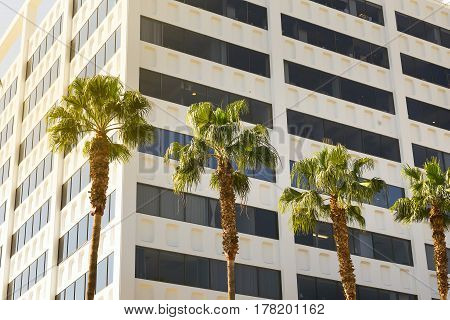 Palm trees in city of Los Angeles on a building background in sunlight