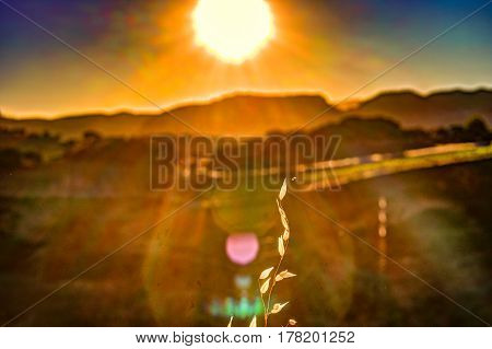 Autumn grass and wildflower background with rays of sun