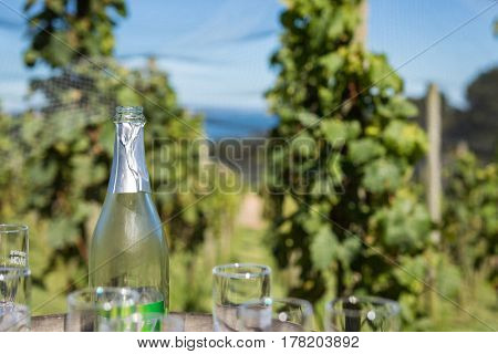 Empty wine bottle in vineyard