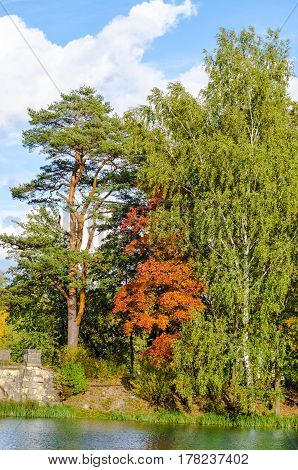 Forest autumn landscape on the lake of the Gatchina Park with pine trees and birches against the blue sky and clouds