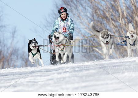 PETROPAVLOVSK-KAMCHATSKY KAMCHATKA PENINSULA RUSSIA - FEBRUARY 23 2017: Kamchatka Kids Competitions Sled Dog Race Dyulin (Beringia). Runs dog sled young Kamchatka musher Grishina Elizabeth.