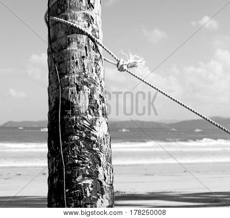 A Rope From An Hammock Near The Ocean Shore