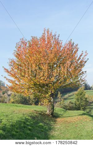 Generic view of a tree in autumn on a blue sky