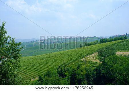 Summer landscape in Langhe hills, Piedmont, Italy