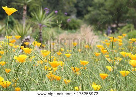 gelb yellow orange Blume flower Pflanze plant blühen Frühling spring grün green Botanischer Garten botanical garden Blumenwiese hayfield
