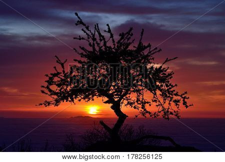 Colorful dawn over the sea of clouds, backlit tree and small island in background