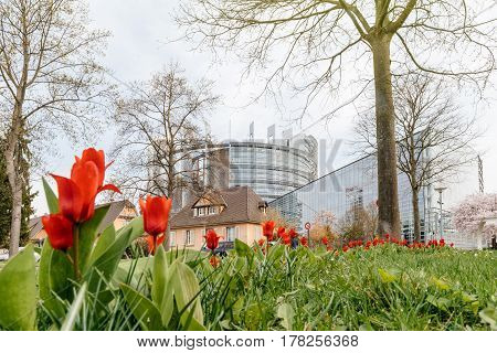 Low angle view of European Parliament seen through red spring tulips. The European Parliament (EP) is the directly elected parliamentary institution of the European Union (EU)