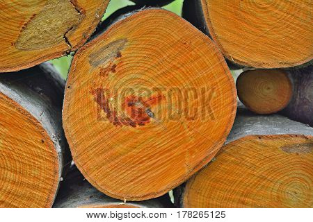 A close up of the pile of alder logs.