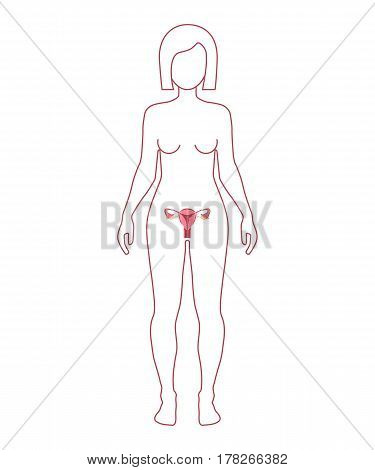 Female Reproductive System. Woman silhouette. Vector illustration flat design