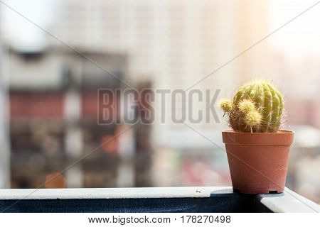 close up cactus on corner of balcony in morning light and copy space blur hirise building for text