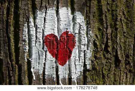 Heart drawn on tree in the forest as a marker for health paths through the woods