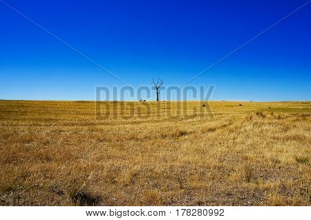 Rural Landscape With Dry Grass And Silhouette Of Dead Tree