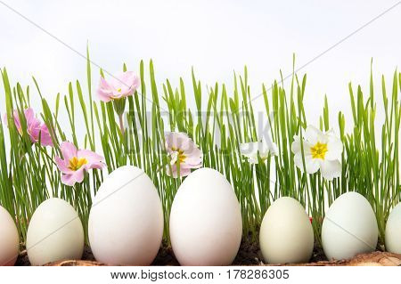 White Chicken Eggs And Flowers In Wheat