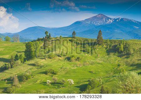 Carpathian Spring Valley Below The Hoverla