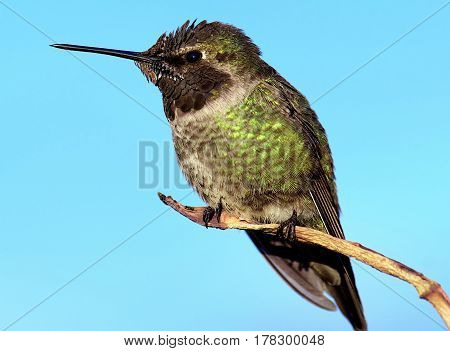 Humming bird resting on branch tree relaxing