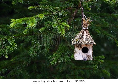A small house (trough) is hanging on a tree. Conceptual photo about the problems of real estate construction. Buying an apartment mortgage. Affordable housing outside the city