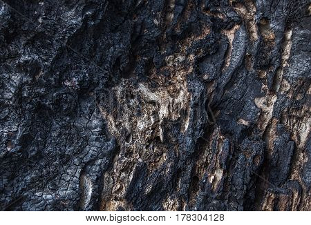 Texture of burnt wood full frame, close up