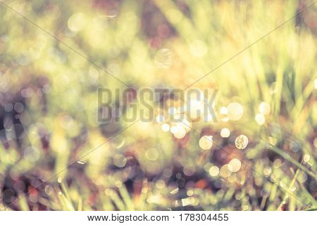 Abstract natural background. Fresh spring grass with dewdrops on grass defocused light blurred background with bright sunlight outdoor at the daytime. Vintage tone.