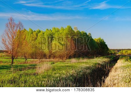 Mixed deciduous-coniferous forest landscape under evening sky with clouds in sunlight, Irpin, Ukraine. Green meadow with young grass the first spring greens. Path to forest under sun beam