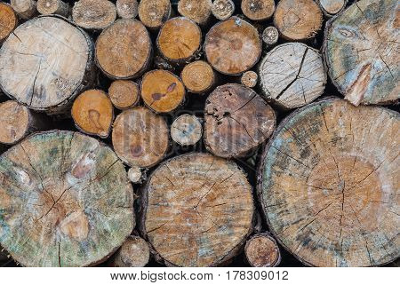 Closeup to Big and Small Round Shaped Log of Old Wood Gnarl Background
