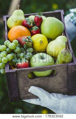 Fresh fruit. Farmer with bowl of fruit.s. Fruit basket.