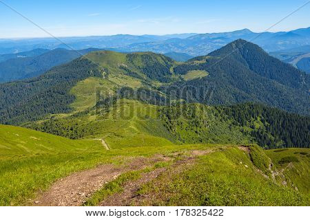 Green Hills Covered With Fresh Grass And Pine Forest