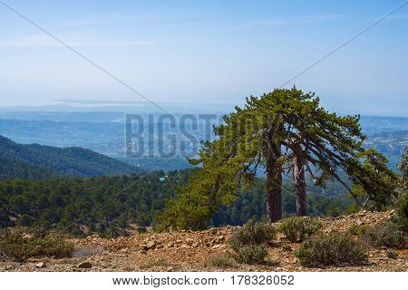 Picturesque Lonely Pine On A Stony Slope