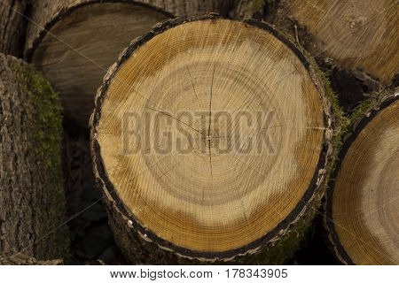 Pine saw cut with bark and moss. Wooden background. On surface of saw cut are clearly visible knots and annual rings.