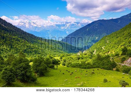 Large green lawn covered with green grass and all around stand high mountains in snow and beautiful sky on a summer day. Upper Svaneti Georgia Europe. Happy lifestyle. Beautiful universe.
