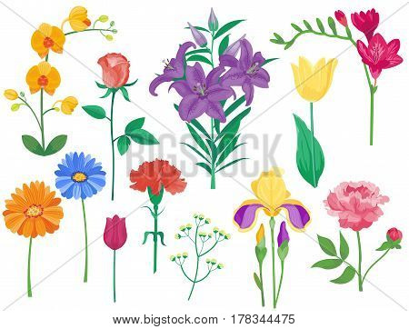 Cartoon petal vintage floral vector bouquet garden flower botanical natural peonies illustration and summer floral greeting card spring blossom. Botany colorful rose flora element decoration.