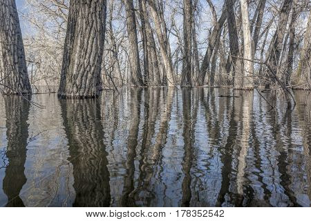 trees submerged in lake water in springtime - abstract reflections