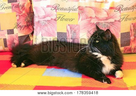 black cat sprawled on the colorful sofa