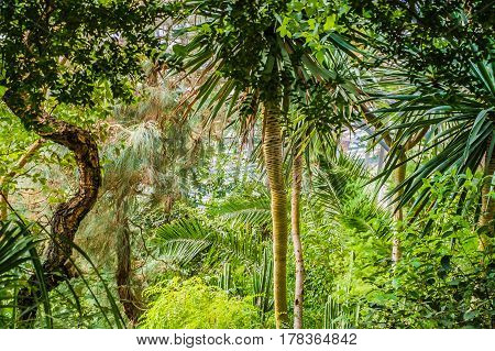 Bright green tropical trees in the  garden