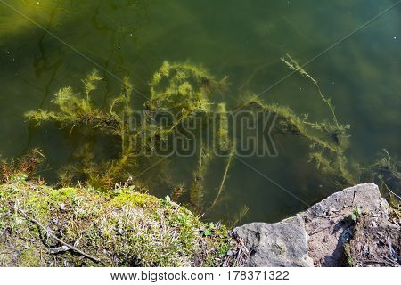 Lake Rock Shore Weed Weeds Green Slimy Foggy Watter Green Sunny Day Bright Abstract Closeup Texture
